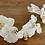 Thumbnail: Orchidej bílá