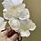 Thumbnail: Bílá kamélie