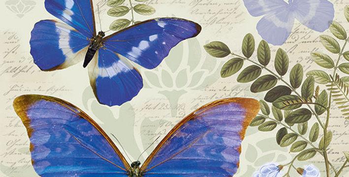 Ubrousky motýli