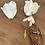 Thumbnail: Brambořík bílý