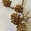 Thumbnail: Zlatá větvička šišek