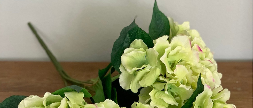 Hortenzie zelená