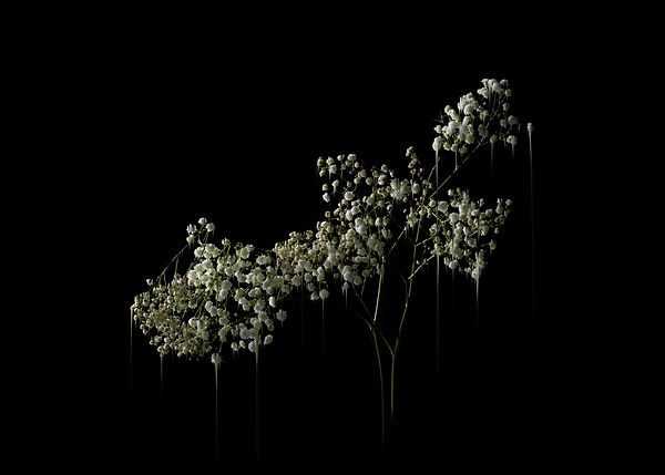 FLOWERS for Beyond Photography Leeds Art