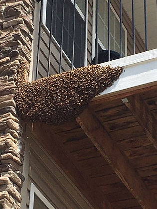 Swarm in apartment complex.jpg