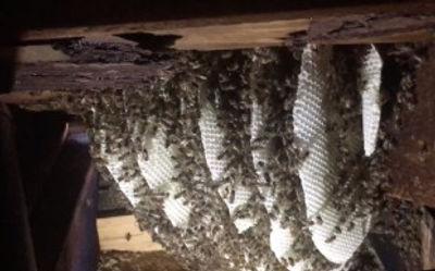 Bees in 2245 ceiling.jpg