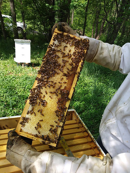 Honey cells.jpg
