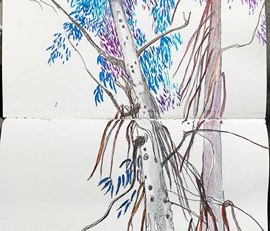 sketchbook - eucalyptus