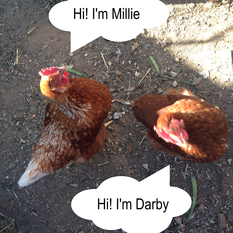 Darby and Millie's debut!!