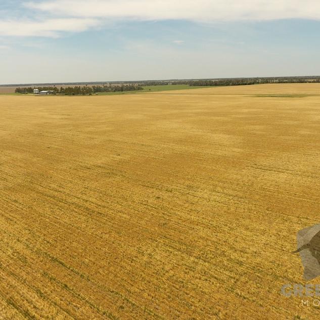 Barley Drone.jpg