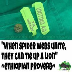Spiderwebsandlions