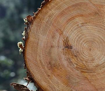 松葉製作所 樹種一覧