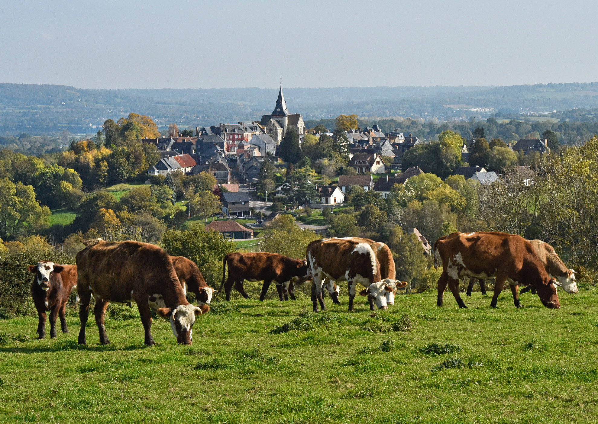 Le village de Beaumont et ses vaches normandes