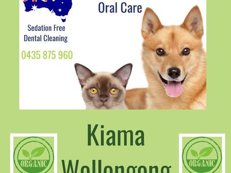 Wollongong & Sydney Pet Dental