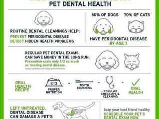 Pet Dental Locations with Dr Cesar - Sedation Free 🌱🐕🐈
