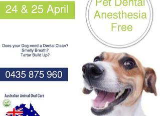 Adelaide Doggy Dental