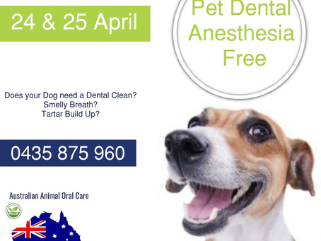 Adelaide Doggy Dental
