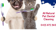 Queensland Pet Dental on now 🐶🐈🇦🇺