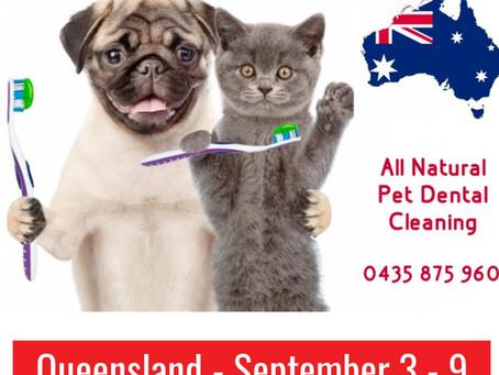 Queensland Pet Dental on now 🐶🐈🇦🇺
