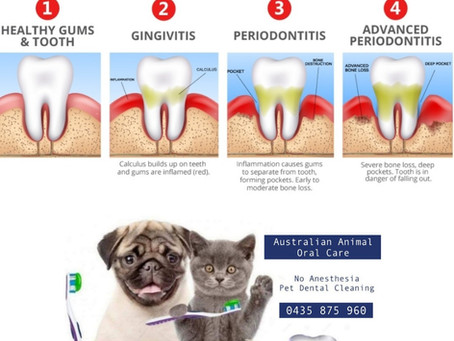 Why Should I get my Dog's Teeth Cleaned?
