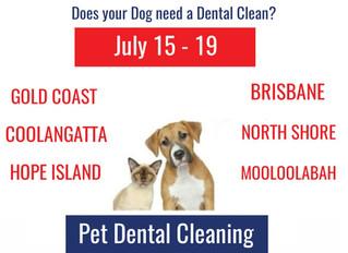 Queensland Doggy Dental in July