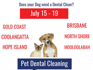 Queensland Doggy Dental in July