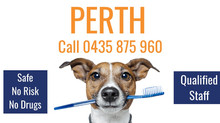 Perth Pet Dental