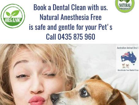 Doggy Dental Sydney🐕