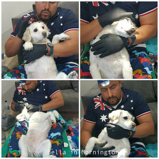 Sedation Free Dog Dental
