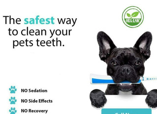 Doggy Dental NSW July