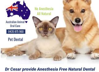 Pet Dental - Gold Coast - Noosa Dental Clinics