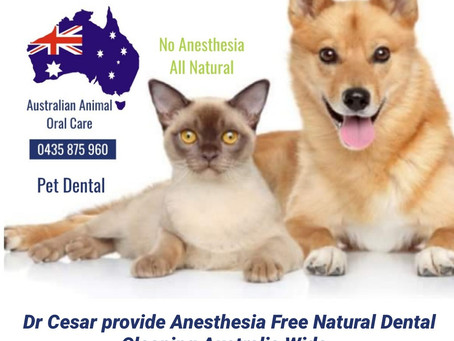 Pet Dental - Gold Coast - Noosa Dental Clinics