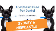 Sydney Pet Dental Time