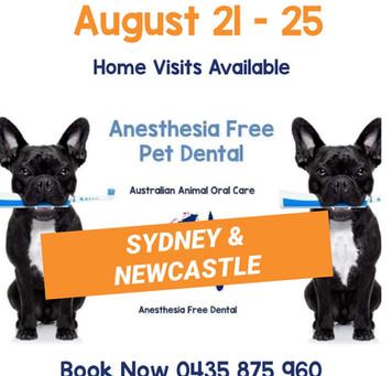 Sydney Pet Dental Time