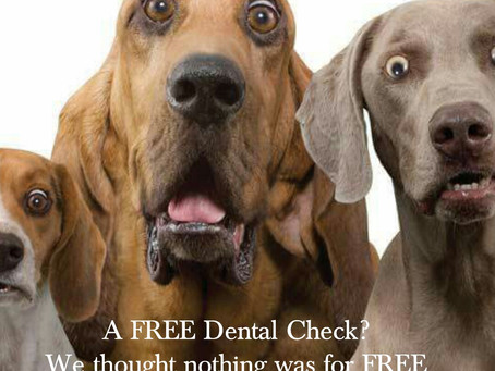 Dental Clinic Locations Melbourne, Adelaide, Canberra, Brisbane, Gold Coast