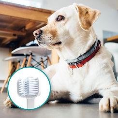 Mira-Pet-dog-toothbrush-large-dogs.jpg