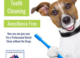 Doggy Dental for NSW & QLD