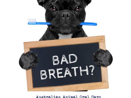 Sydney & NSW Doggy Dental Time