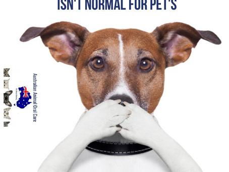 Canberra Doggy Dental - June 17 - 19