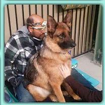 Dog Dental Sedation Free