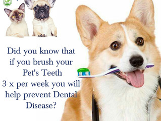 Pet Dental Cleaning - Facts