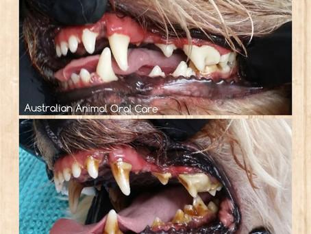 What is Gum Disease in Pet's