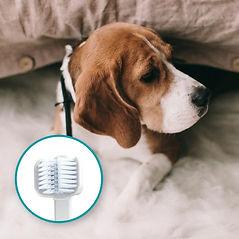 Mira-Pet-dog-toothbrush-medium-dogs (1)1