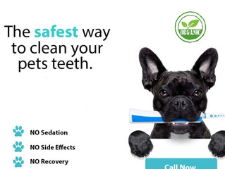 New Pet Dental Locations