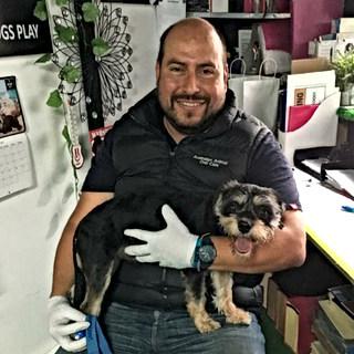 Pet Dental Anesthesia Free