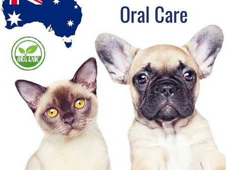 Sydney Dental Clinic for Pets
