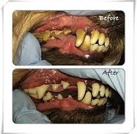 What is Pet Dental Disease?