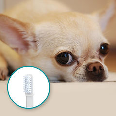 Mira-Pet-dog-toothbrush-small-dogs1.jpg