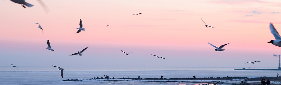 Pink_Sky_w_Birds_Crop.png