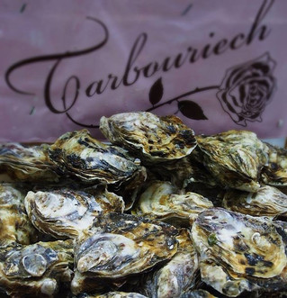 """Enjoy Fresh Oysters """"Special Tarbouriech"""""""