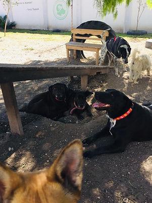 Pensión 3 Perros